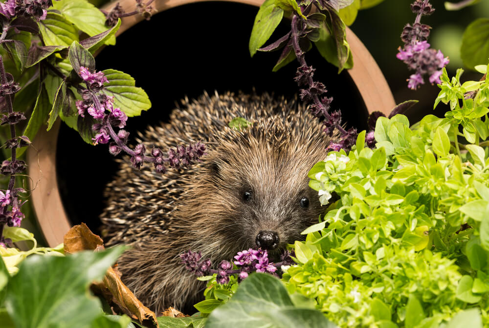 How To Create a More Wildlife-Friendly Garden