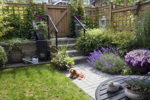 Small Garden Space 2021