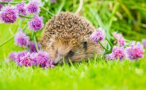 wildlife friendly garden 2021