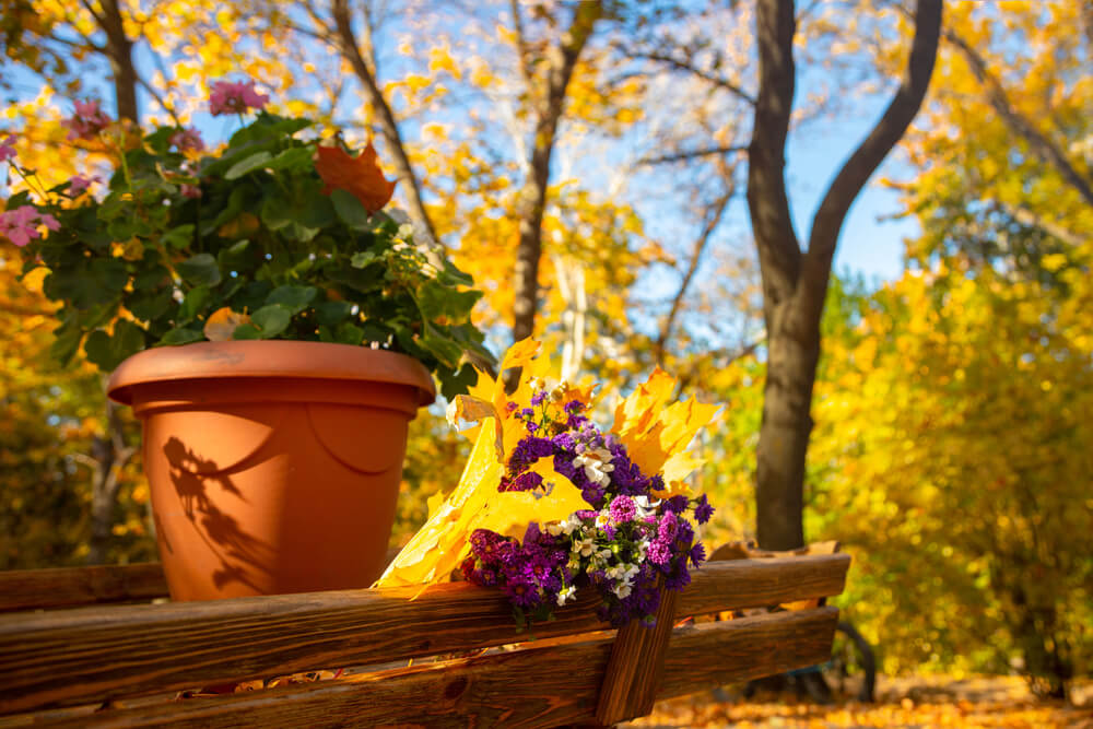 How to Enjoy Your Garden in Late Summer